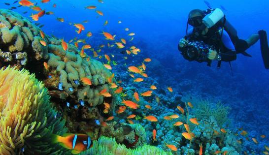 Tortue sur les récifs de la mer Rouge