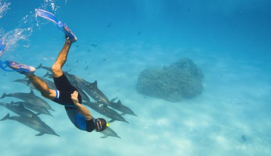 Croisière apnée et snorkeling en mer Rouge avec Morgan Bourc'his