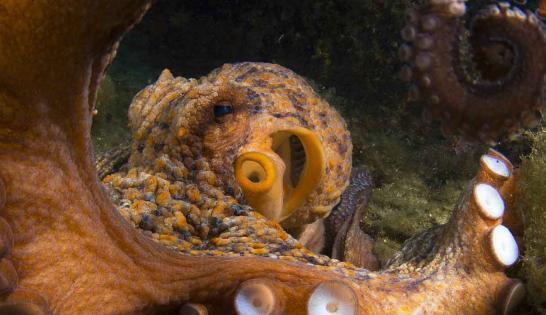 Un poulpe observé à Marseille