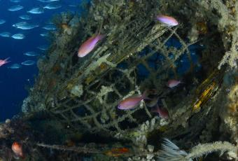 Fond sous-marin de la Méditerranée