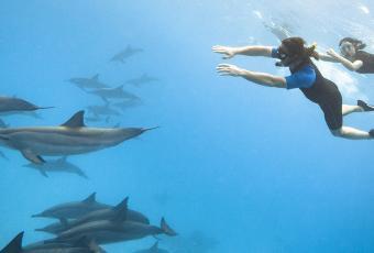 Activité snorkeling à la rencontre d'un banc de dauphins